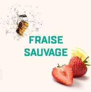 Fraise Sauvage